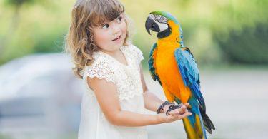 Amerikan Papağanı Hakkında 5 Eğlenceli Gerçek