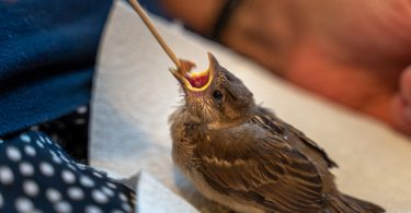 sağlıklı bir yavru kuş nasıl seçilir