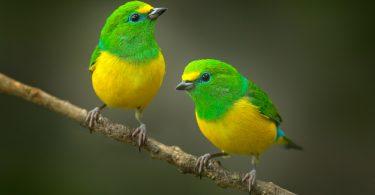 kuşlar neden baş aşağı durur
