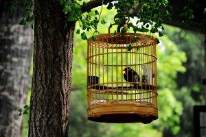 Neden Balkonda Kuş Beslenmez
