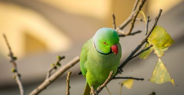 yeşil papağan hakkında 5 eğlenceli gerçek