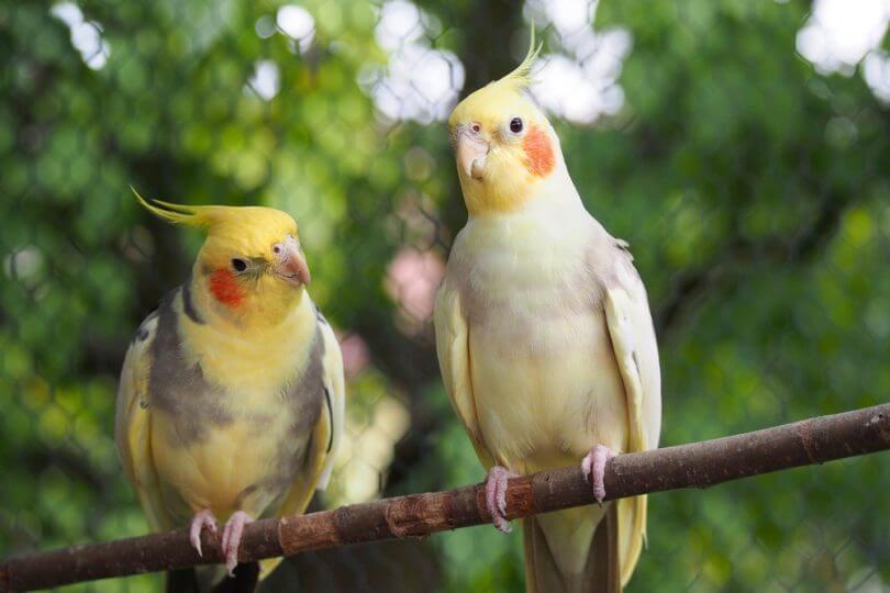 konuşacak kuş nasıl anlaşılır