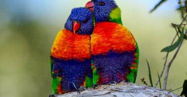 gürültülü papağan türleri