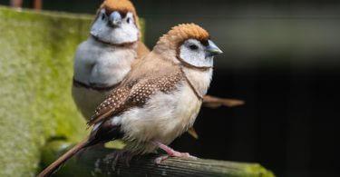 ispinoz kuşu özellikleri