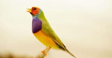 evcil bir kuş satın alma ve bakım maliyeti