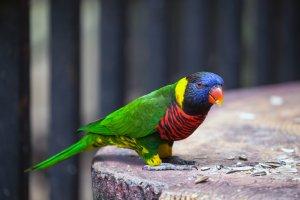 parlak renkli kuşlar