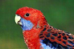 parlak renkli kuş türleri