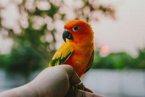 konur kuş türü