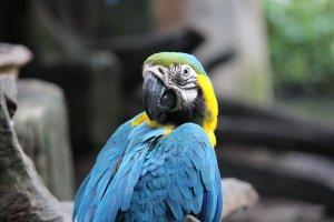 çocuklar için uygun olmayan kuş türleri