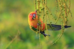 en parlak renkli kuş türleri