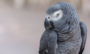 eğitimi kolay kuşlar