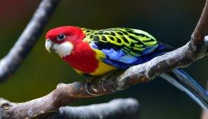 Evde Beslenebilecek kuşlar