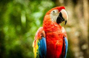 renkli Amerikan papağanı