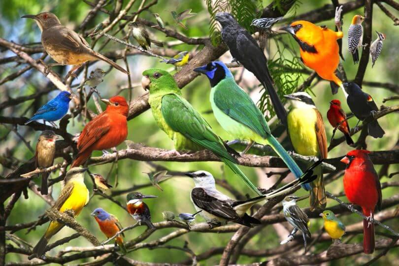 sağlıklı bir kuş dışkısı nasıl olmalı