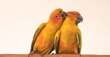 softbill ile hookbill kuş