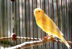 evcil bir kuş almak