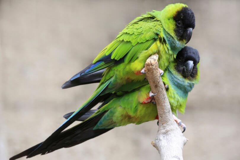 bakımı kolay kuşlar