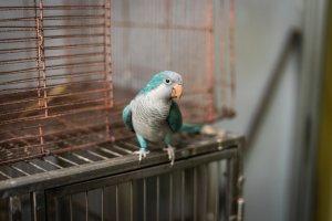 Popüler Orta Boy Kuş Cinsleri