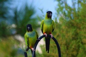 orta boy kuş cinsi