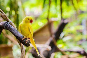 yeşil papağan bakımı