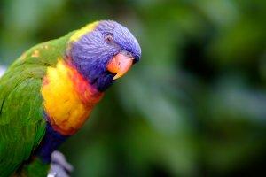 bakımı kolay olan orta boy kuş cinsleri