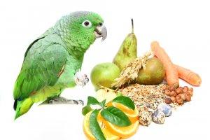Güney Solgun Amazon Papağanı