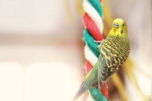 konuşan kuş türleri