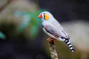 apartmanda bakılabilecek kuş türleri