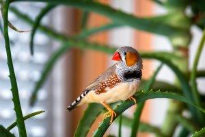 Yaşlılar İçin Uygun Olan Kuş Türleri