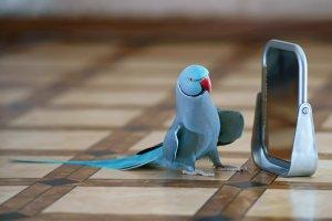 yeşil papağanları