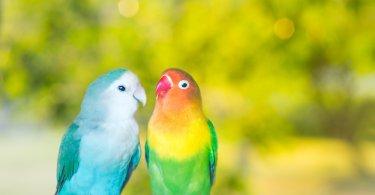 Kuşlarda Renk Değişimi