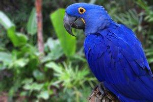 Amerika papağanı özellikleri ve bakımı