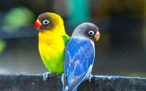 çalışan kişiler için kuş bakımı