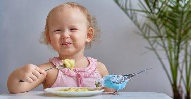 Muhabbet kuşunun en sevdiği yiyecekler nelerdir?