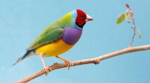 çalışanlar için uygun kuşlar